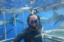 shark cage_6