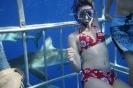 shark cage_7